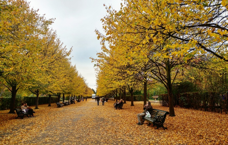 regents-park-autumn-leaves-1