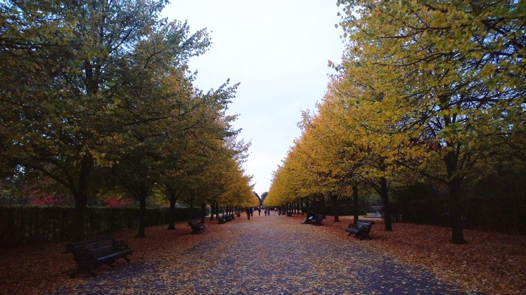 regents-park-autumn-leaves-night