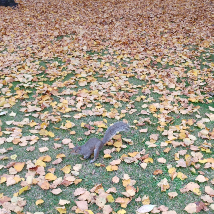 regents-park-autumn-leaves-squrriel